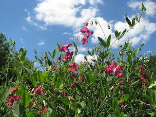 цветочное лето