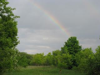 летняя радуга