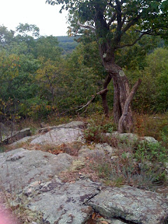 View from Kinnelon' Bear Mountain