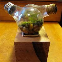 Light Bulb Terrarium with Moss: Fun Light Bulb Project!