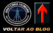 Blog Laboratório de Anatomia