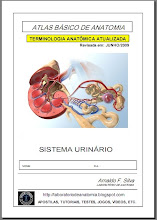 Apostila Sistema Urinário