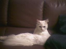 my miau