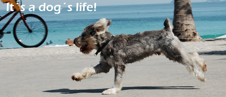 It´s a dog´s life!