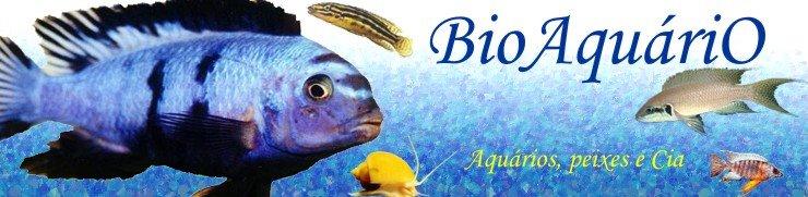 BioAquáriO - Aquários e Ciclídeos Africanos