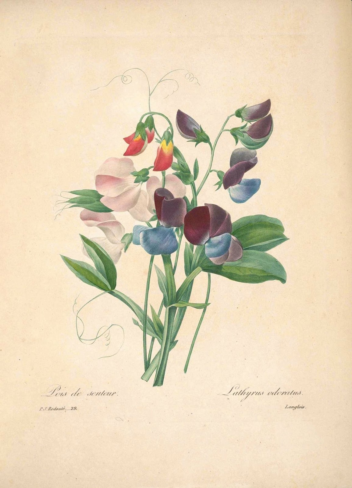 Love S Leftovers By Kristin Botanical Drawings Things I