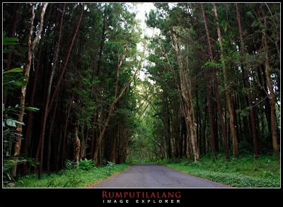 Hutan pinus sudimoro dlingo bantul