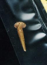 Mapungubwe and Origins of Goldsmithing