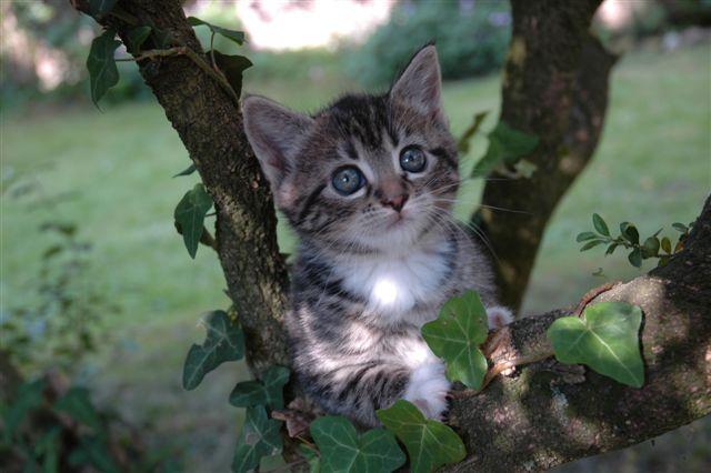 Her er der katte bileder til dem der kan lide katte