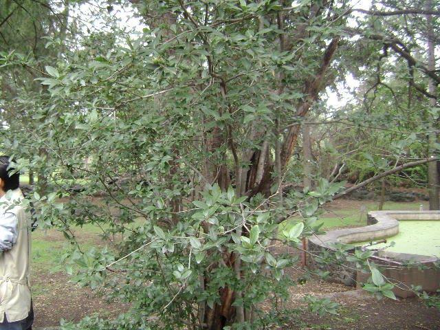 Practica jardin botanico unam for Arboles jardin botanico