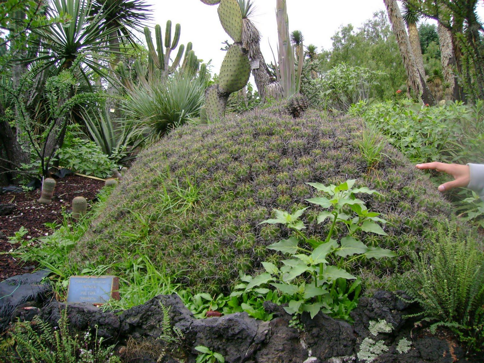 Practica jardin botanico unam for Jardin botanico unam 2015