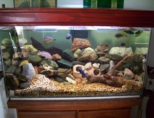 Acuario golden fish acuarios mesa de centro a la venta - Decoracion acuario marino ...