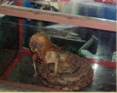 photo ular berkepala manusia