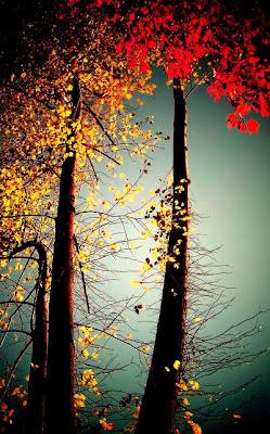 Nature Photography, Nature, landscape photography