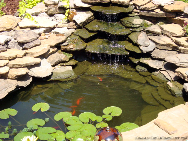 Charmed dreaming of a backyard pond for Backyard fish pond