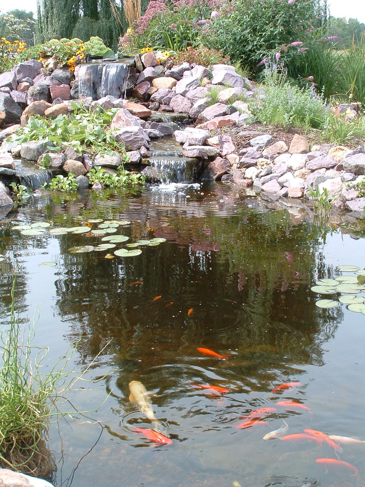 Charmed dreaming of a backyard pond for Pond features