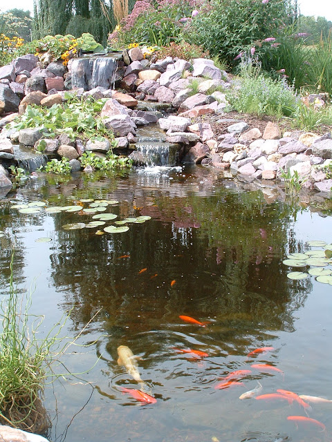 Charmed dreaming of a backyard pond for Big fish ponds for sale