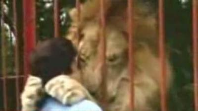 Lion hug rescuer
