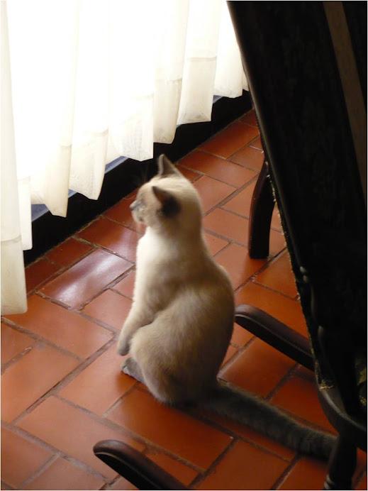 Mi gato Osiris