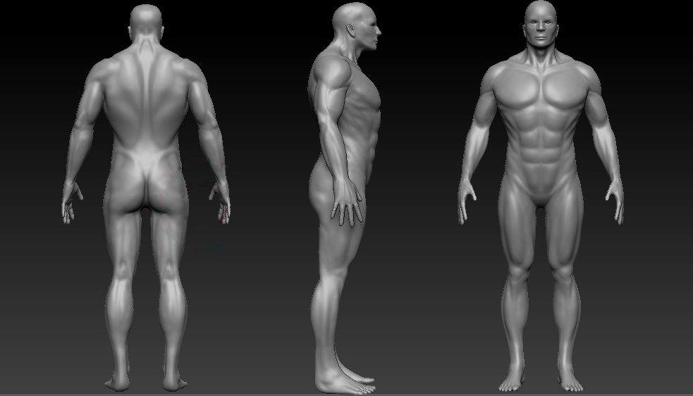 Julee Fuller: Male Anatomy model
