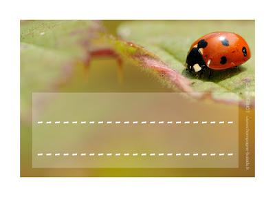 Coccinelle d'automne, étiquette scolaire insecte