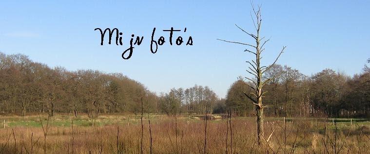Mijn foto's