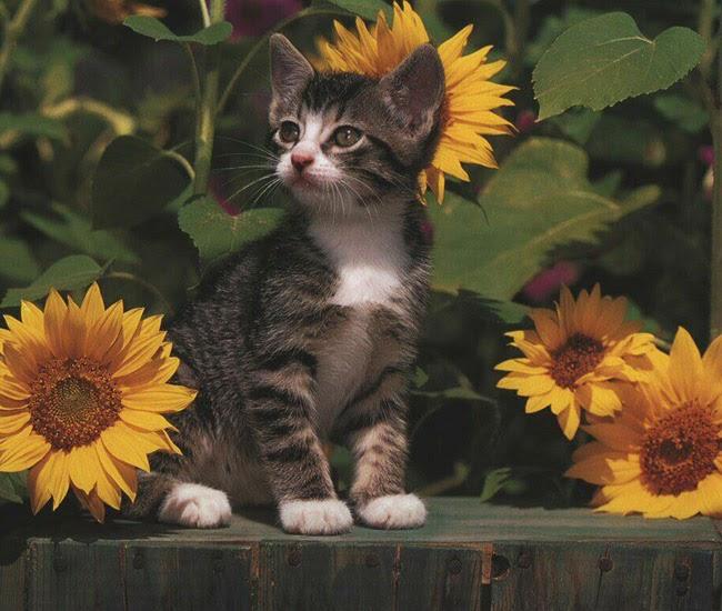Linde5 otro enfoque noticias van a sacrificar a todos for Como ahuyentar gatos del jardin