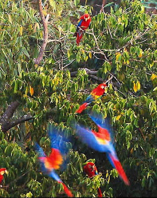 Peligro de extincion: amenaza en el Amazonas