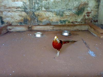 Bannerghatta Bird