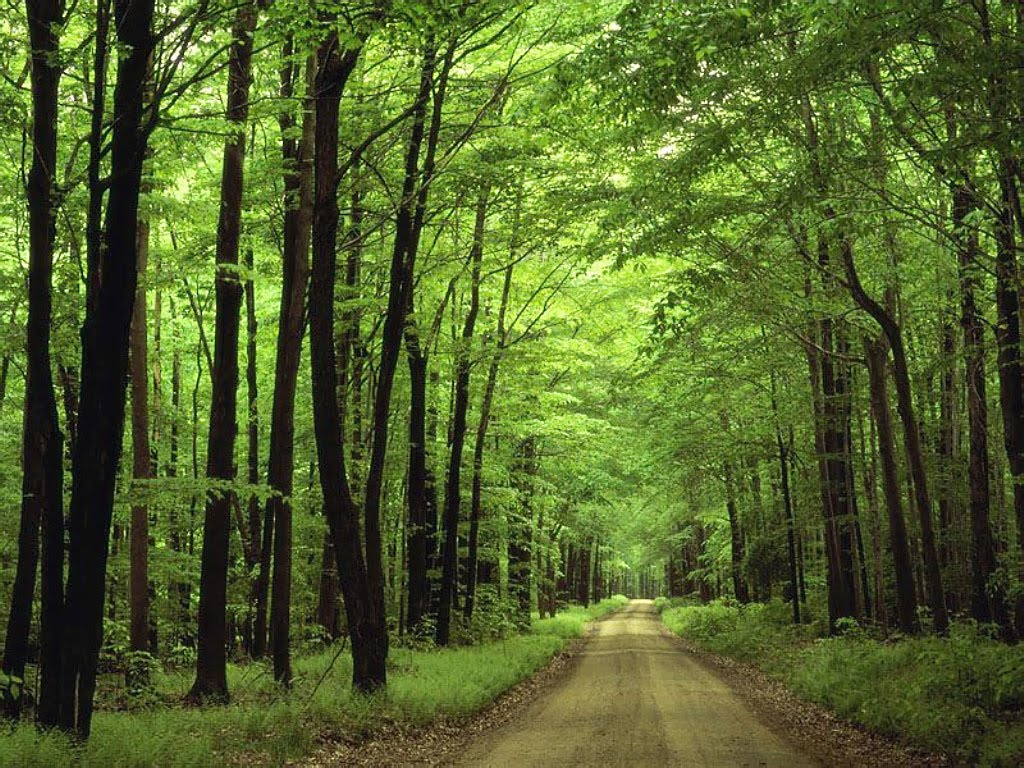 http://1.bp.blogspot.com/_jQ3UQHUyye8/TC9CIPmPLTI/AAAAAAAAAxc/QRdZW7OvvKI/s1600/Allegheny_National_Forest,_Pennsylvania.jpg