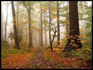http://1.bp.blogspot.com/_jQWv3sKTYOQ/SQ8d-8-0nTI/AAAAAAAAAPE/Hd1sXnP7sTw/s320/Autumn_forest_2_by_mjagiellicz.jpg