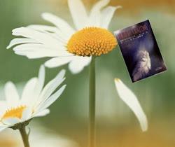 Clicca sul fiore e sfoglia _NUDI DI CANZONE_ nel trailer...