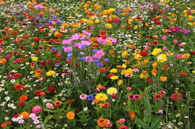 veldje met weidebloemen