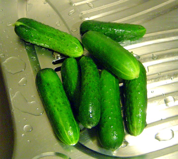 Candied Cucumber - This Is No Pickle Recipes — Dishmaps