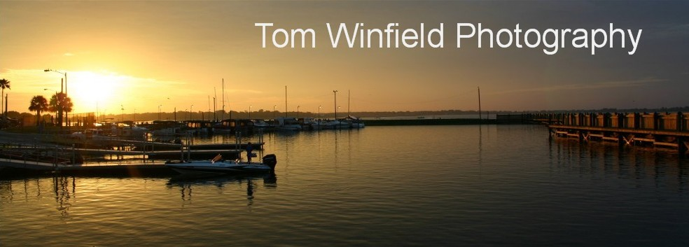 Tom Winfield Photography