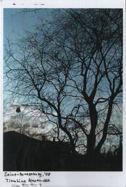 bare tree silhouetted against the sky
