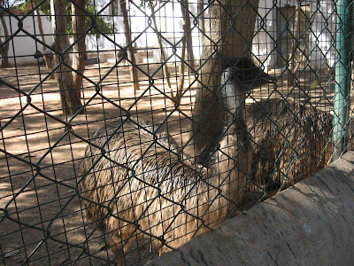 Emu bird in Murugarajendra Matha's zoo