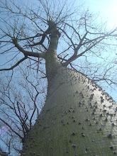 Mi árbol...