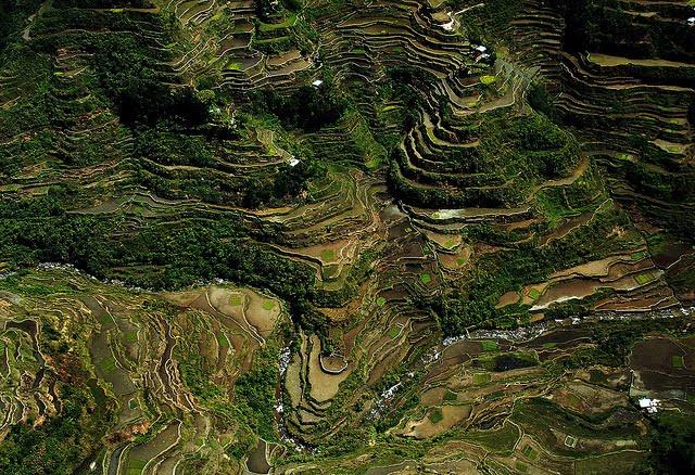 Terasasta polja  Terasasta-polja-pirinca-2