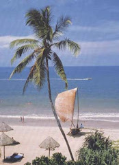 Your holidays in Sri Lanka: