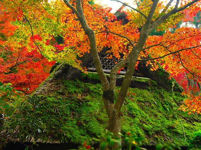 Astonishing Japanese Zen-