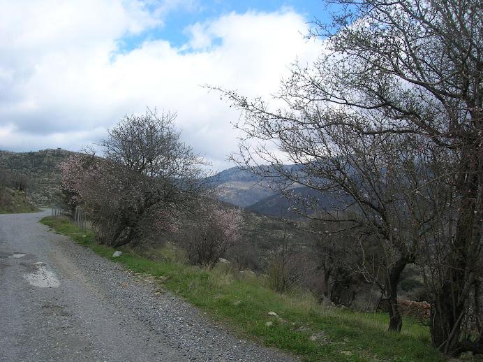 15/3/2009 - άνοιξη και τα δένδρα ανθίσανε