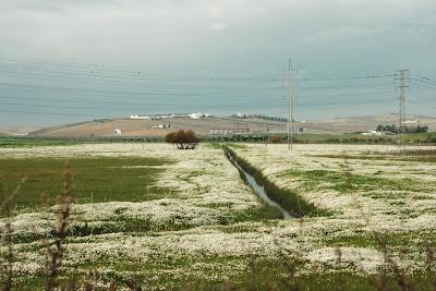 Cañada de 'La Loba' (Jerez)