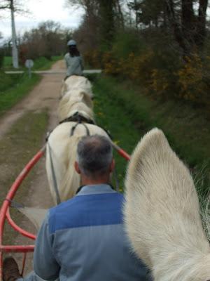 Le poney attelé... DSCF1523