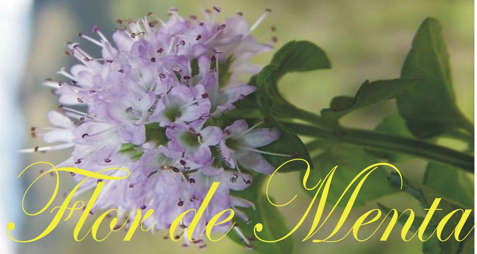 flores jardim camburi : flores jardim camburi:rkmagazine.es: Loja de roupas femininas Flor de Menta