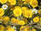 BELEZA...Flores do campo