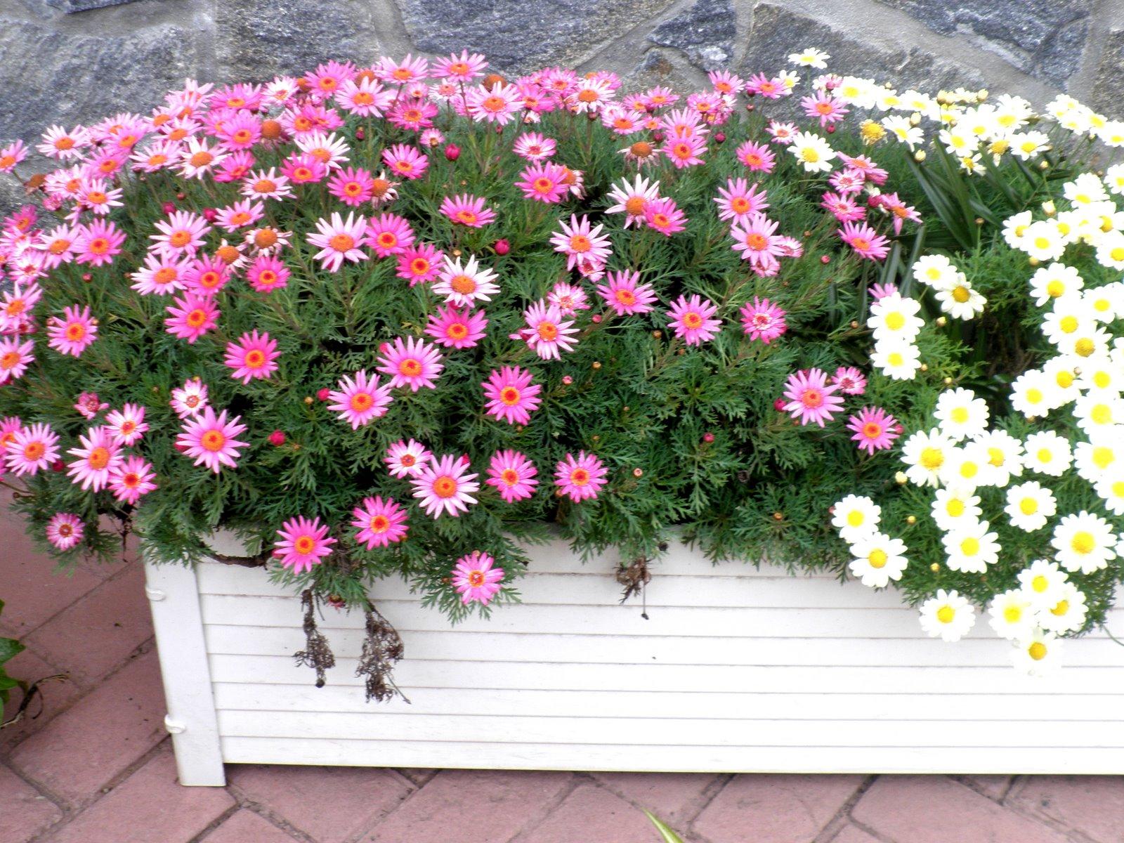 jardinbio PLANTAS Y ESPECIES PARA JARDINES EN MÁLAGA