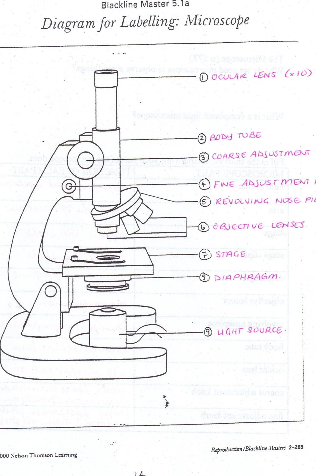 The Compound Microscope Worksheet Free Worksheets Library – Microscope Quiz Worksheet