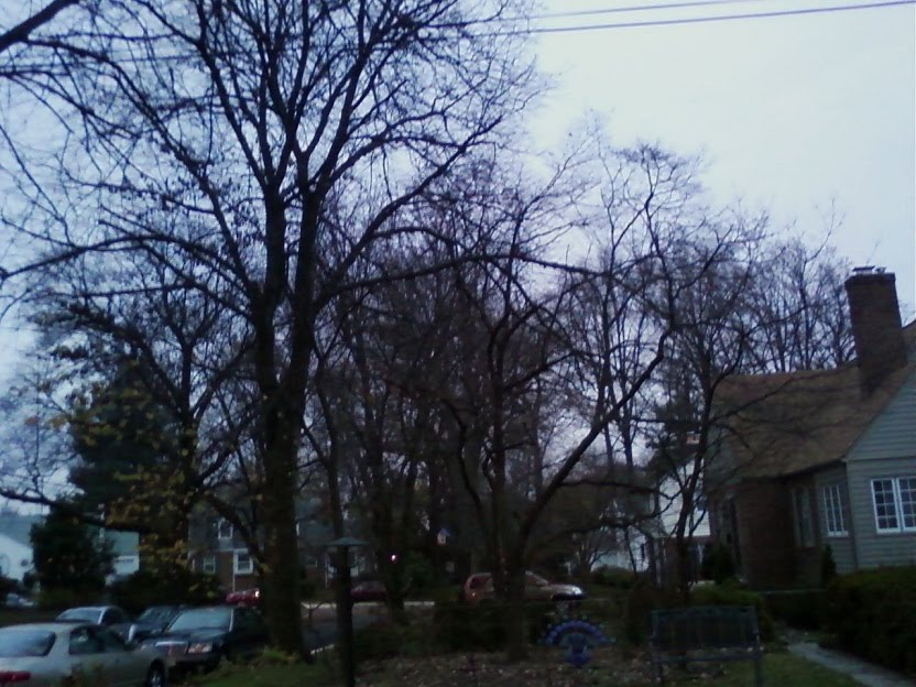 ... four corners area of silver spring md where quill s parents live 4