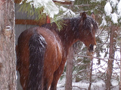 My horse Cocoa!